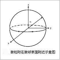 微球传感器示意图